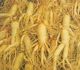 Fresh ginseng roots